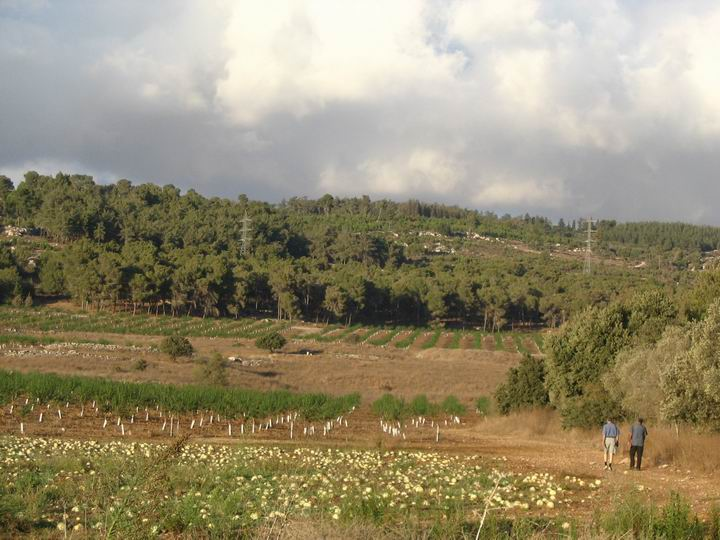 Ma'Alul/Nahalal: view from Migdal Hamek towards north