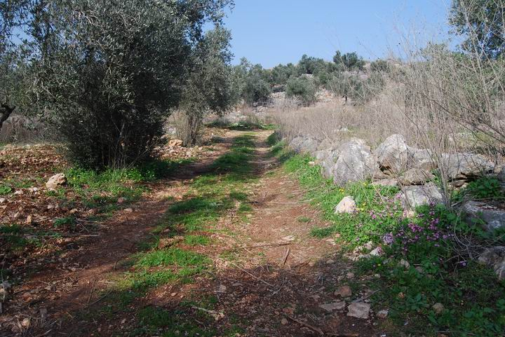 Hurvat (Khirbet) Mehoz - entrance road