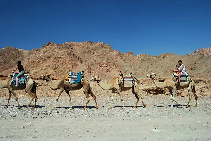Eilat mountains - camel rides