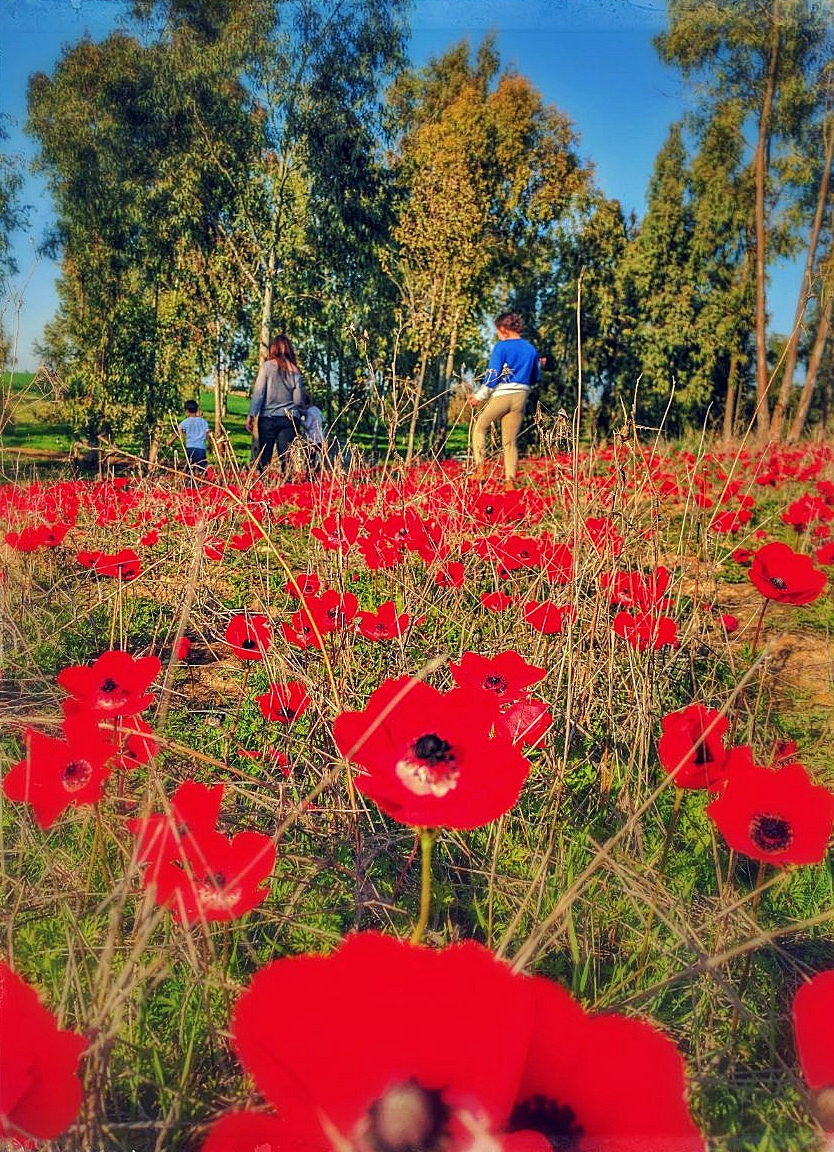 Wild flowers in the holy land izmirmasajfo